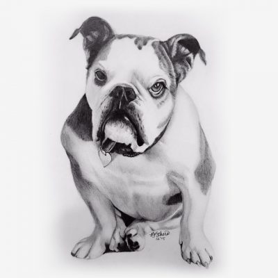 Pencil Portraits of Pets - dogs