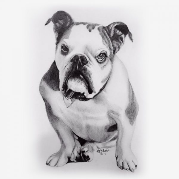 Pencil Portraits of Pets - dogs