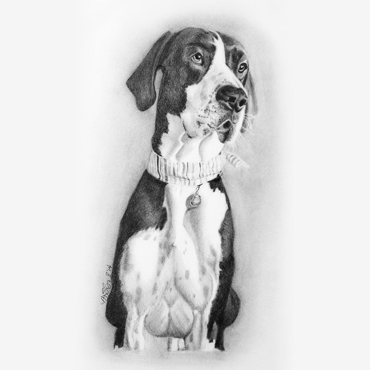 Dog Pencil Portraits - pets