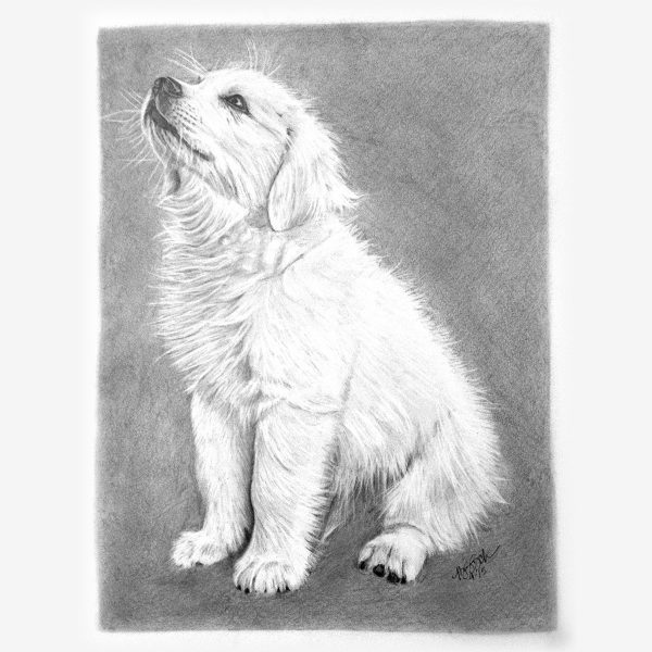 Pet Pencil Portraits